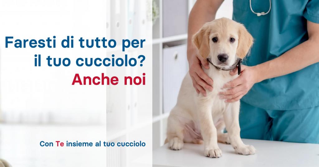 conte assicurazione cane gatto